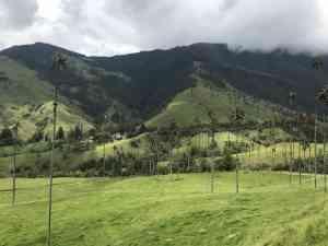 Cocora Valley, Colombia by Zoe Francis