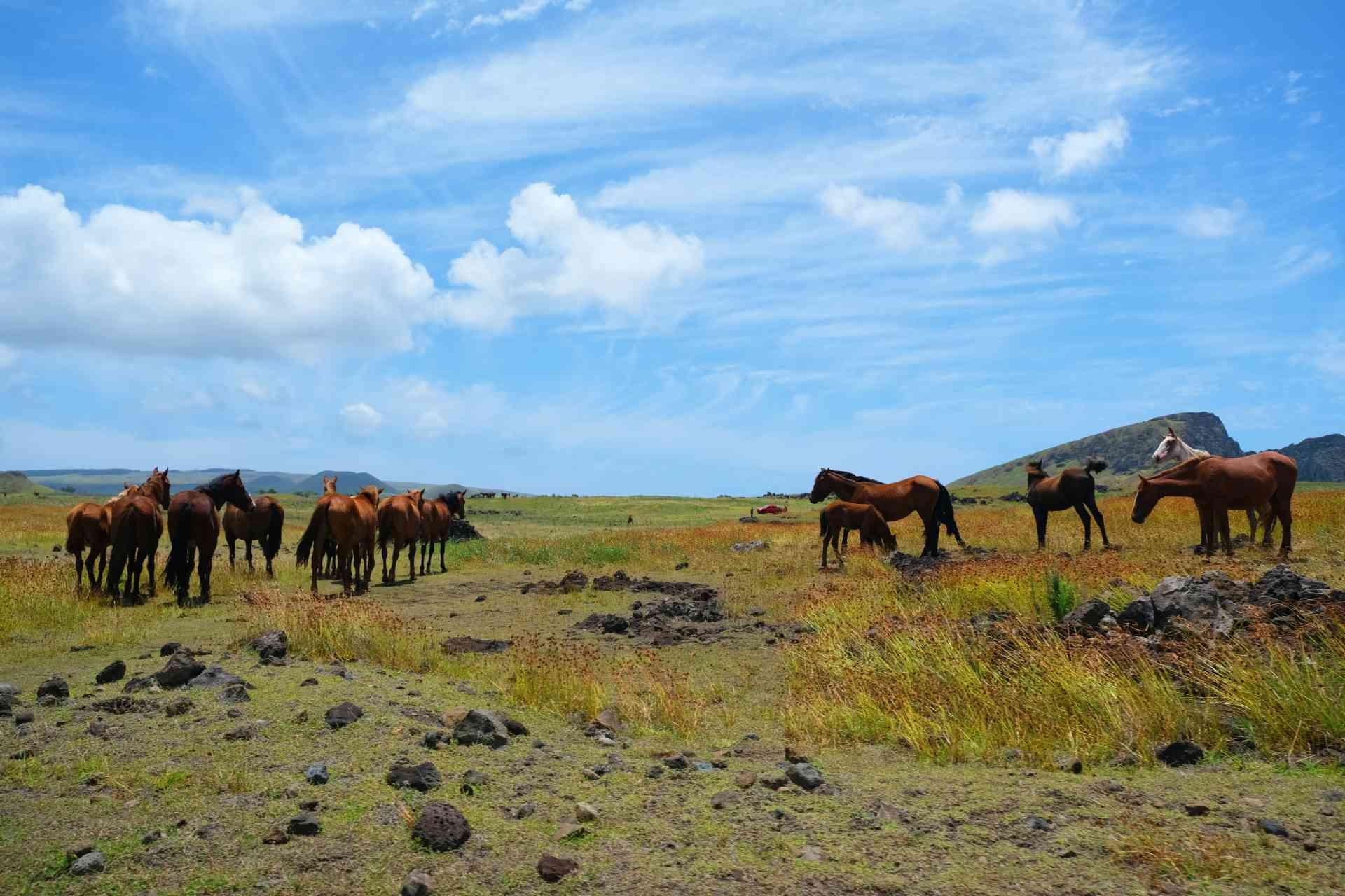 Horses on Easter Island, Chile by Nathalie Marquis/Unsplash