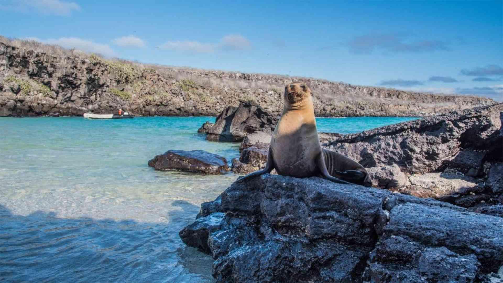 Wildlife of the Galapgaos, Ecuador