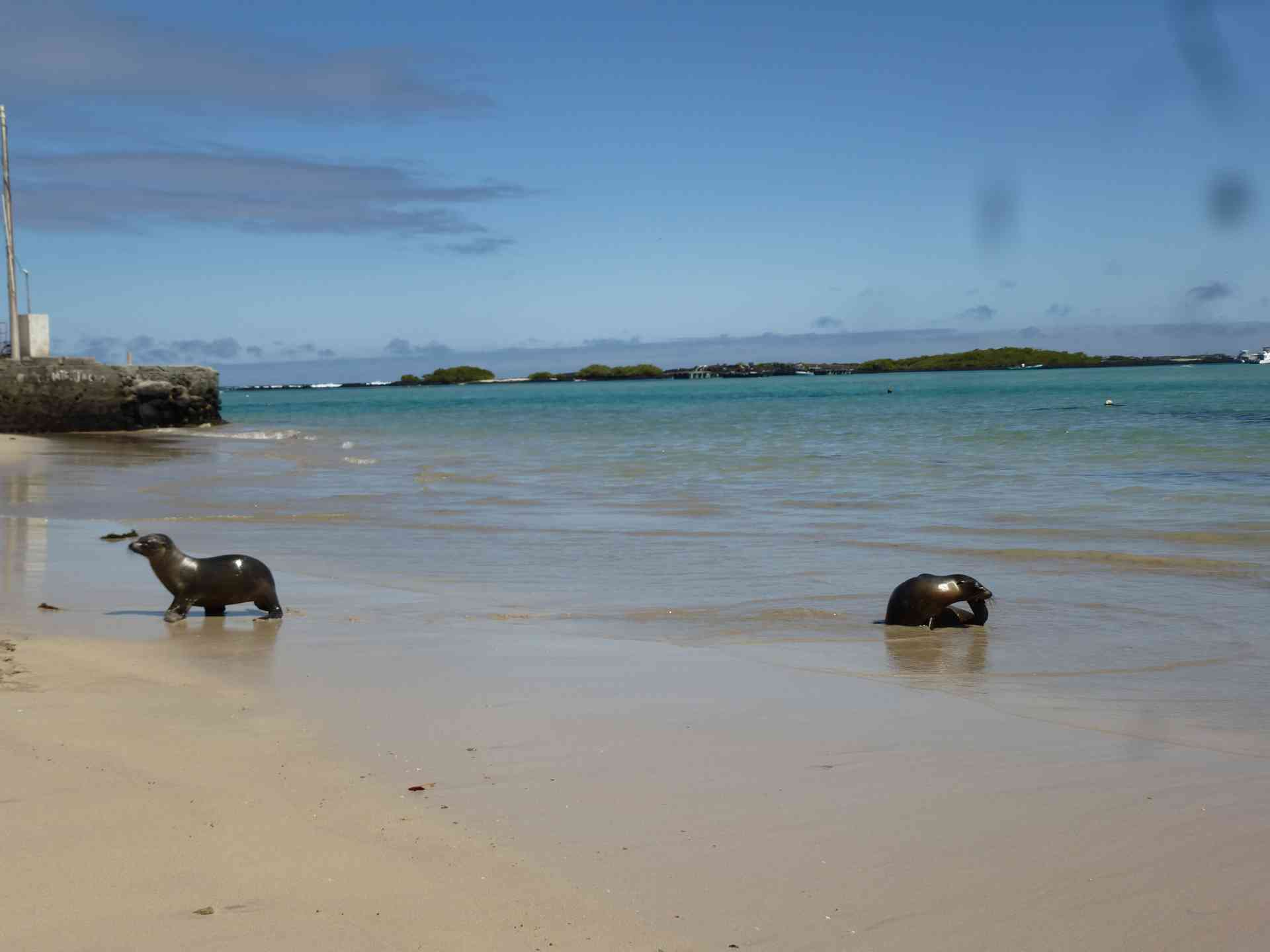 Sea lions in the Galapagos Islands by Marion Bunnik
