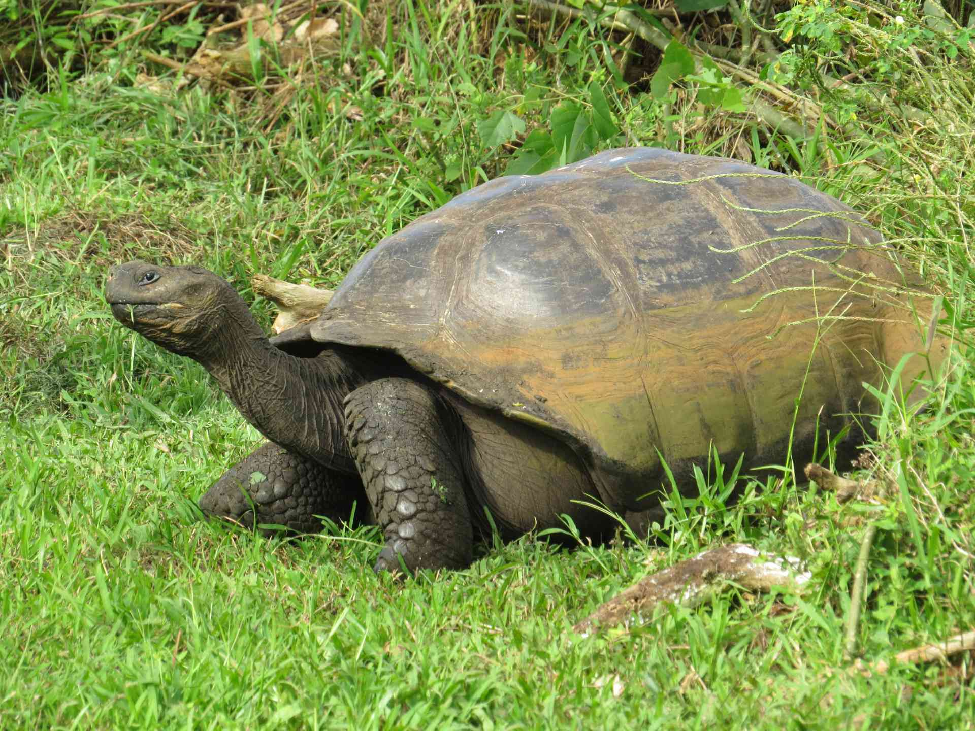 Galapagos Tortoise, Ecuador by Marion Bunnik