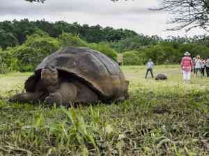 Galapagos Tortoise, Galapagos Islands by David Hein