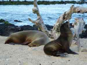 Galapagos fur seals, Ecuador by Marion Bunnik
