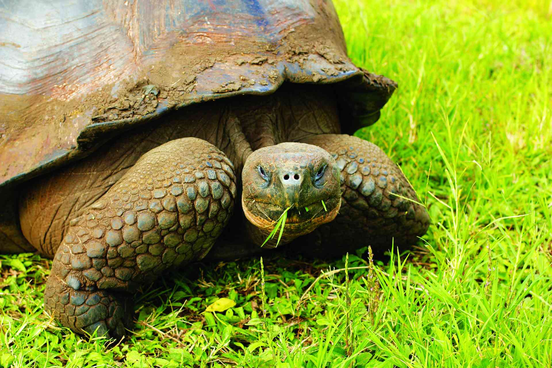 Galapagos Tortoise, Ecuador by David Hammett