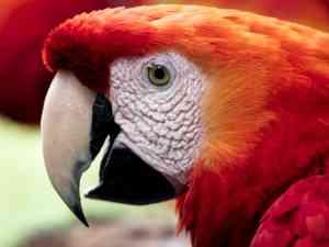 Parque das Aves, Brazil by David Hein