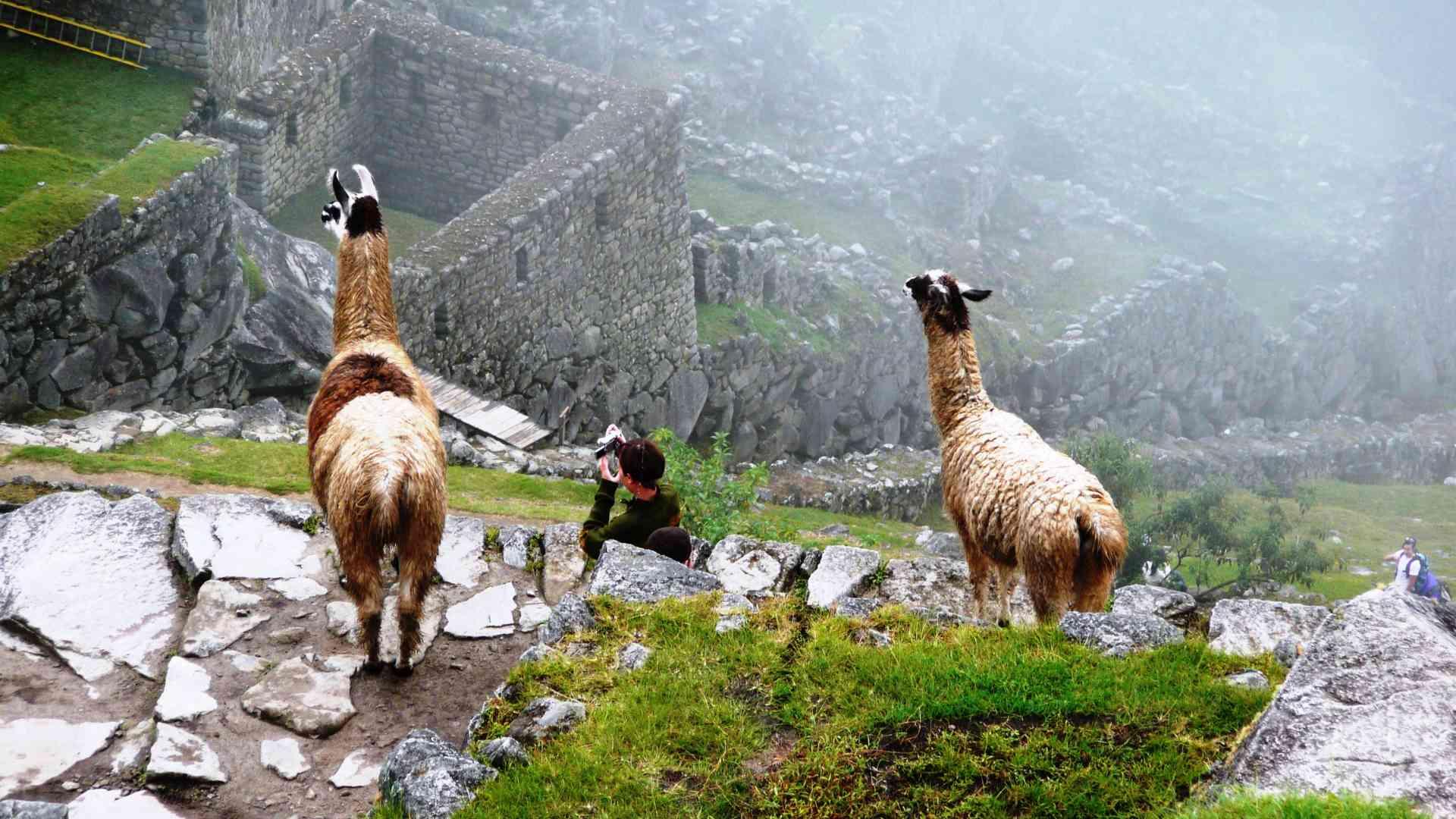 Machu Picchu, Peru by John Pfitzner