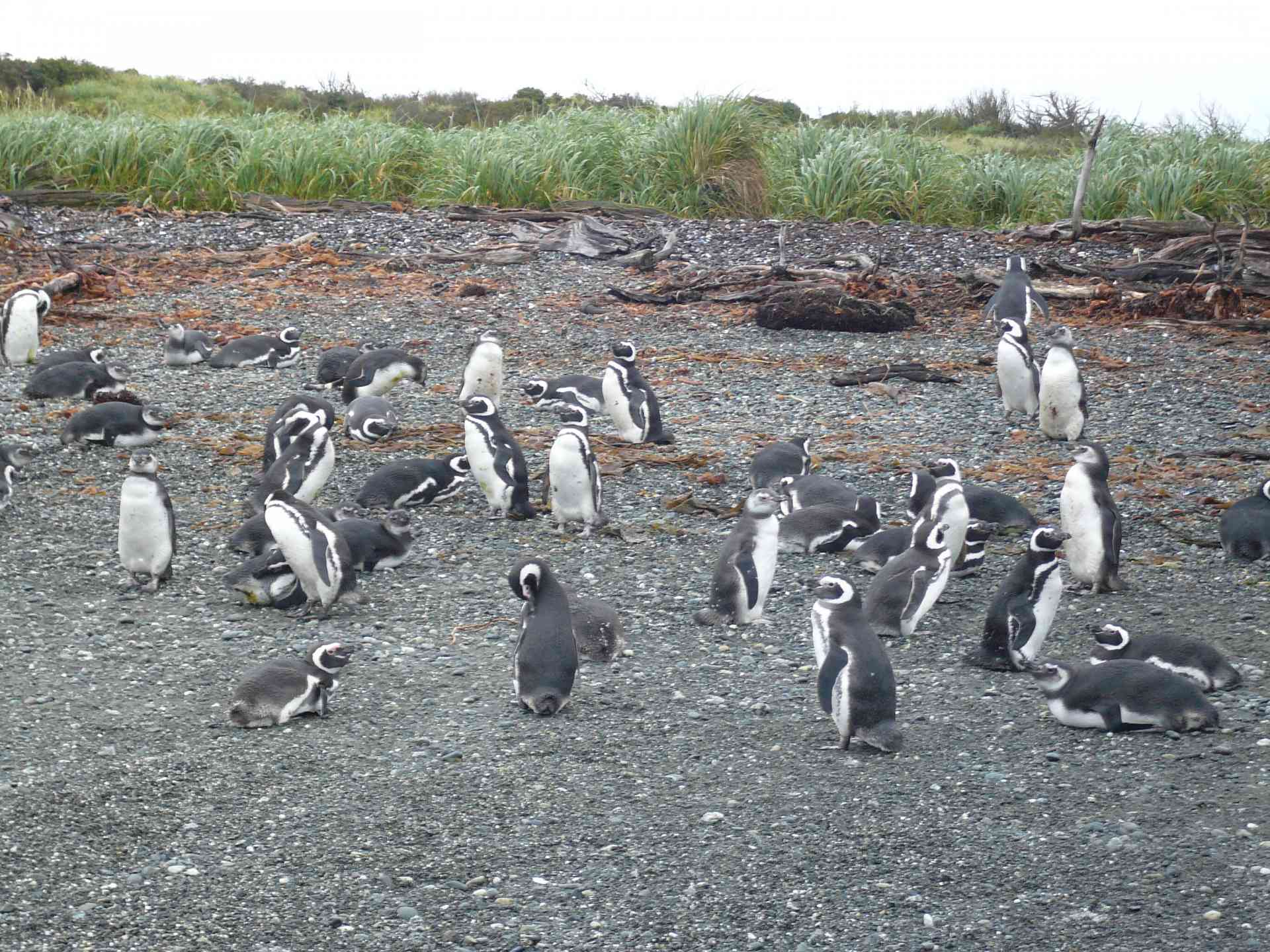Penguins of Patagonia, Chile by Marion Bunnik