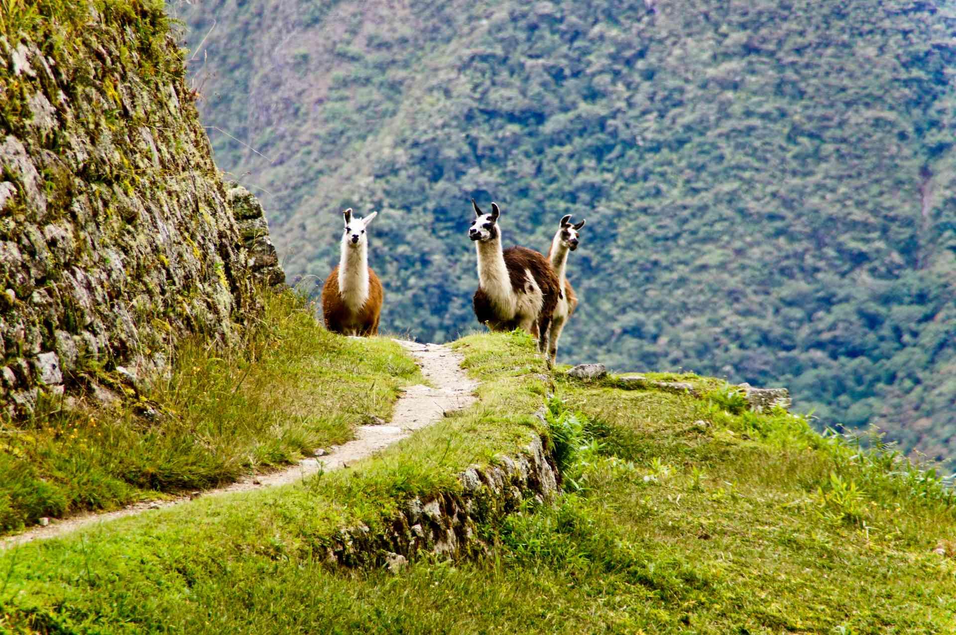 Machu Picchu, Peru by Priscilla Aster