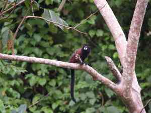 Amazon wildlife, Peru by Annelieke Huijgens