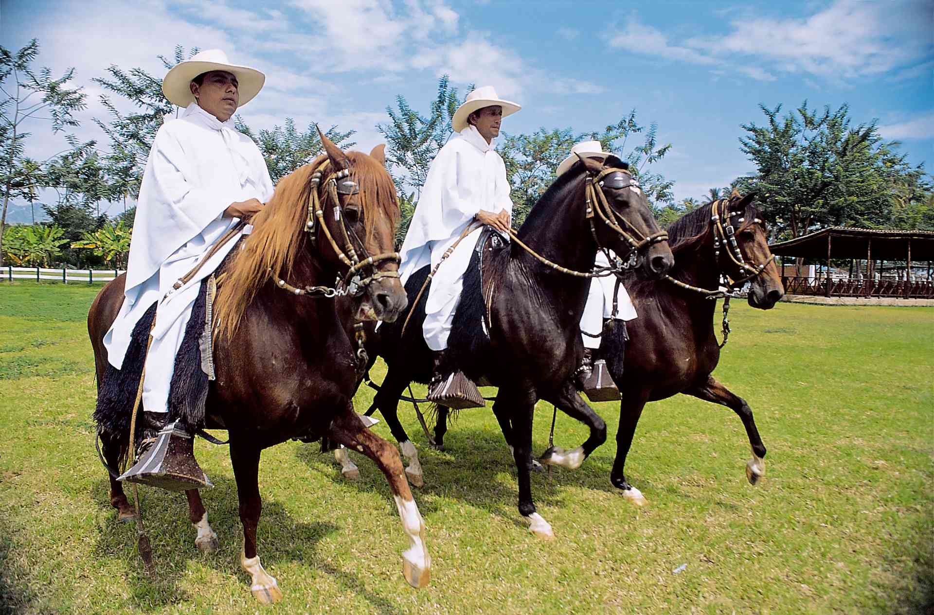 Peruvian Paso Horse Show, Peru by PromPeru