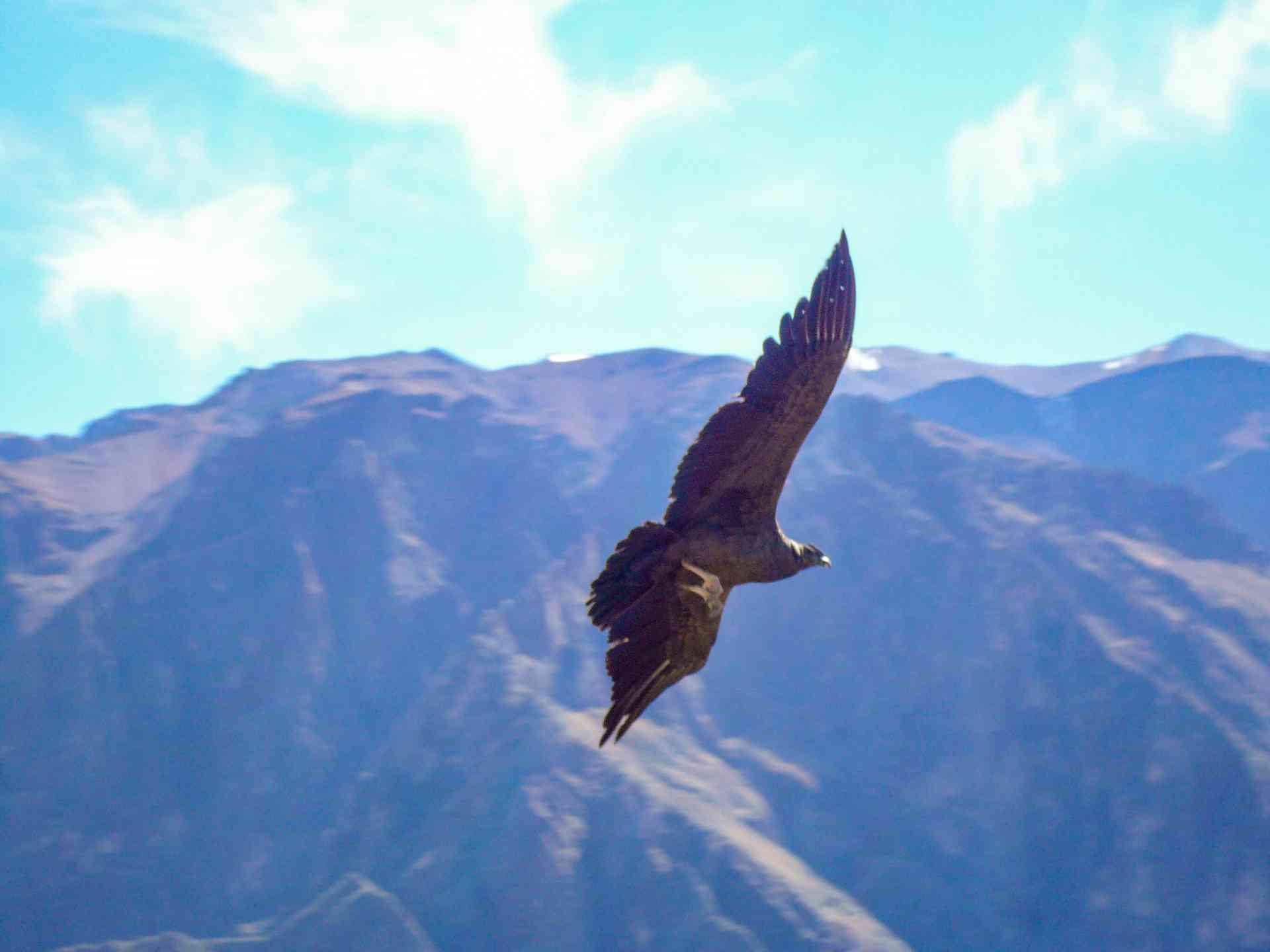 Cross of the Condor, Colca Canyon, Peru by Marion Bunnik