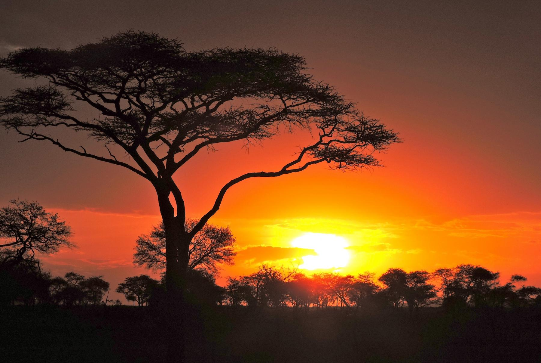 Serengeti - Sunset