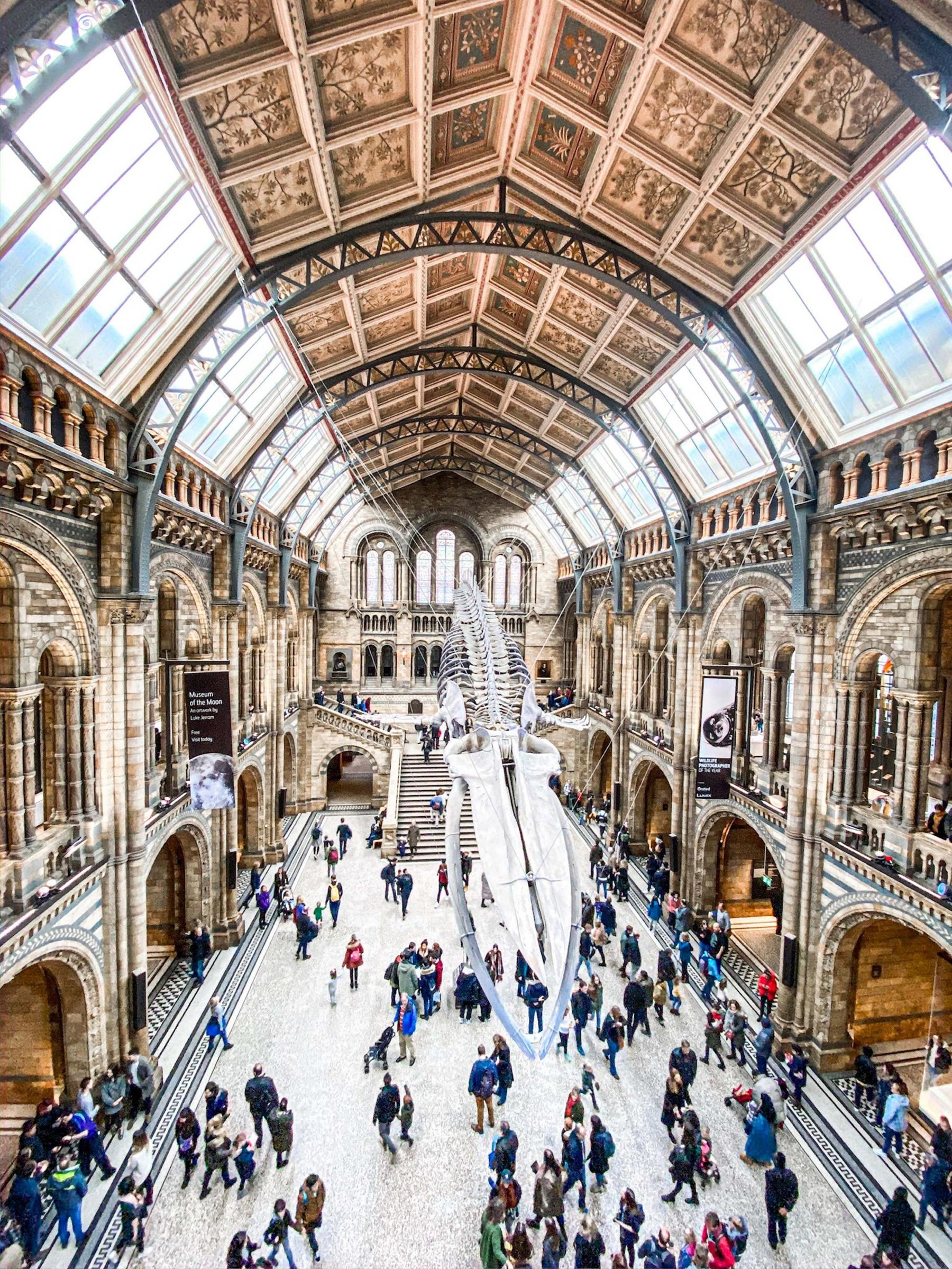 Natural History Museum by Laura Chouette, Unsplash