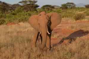 Photo Guide | The magic of Kenya