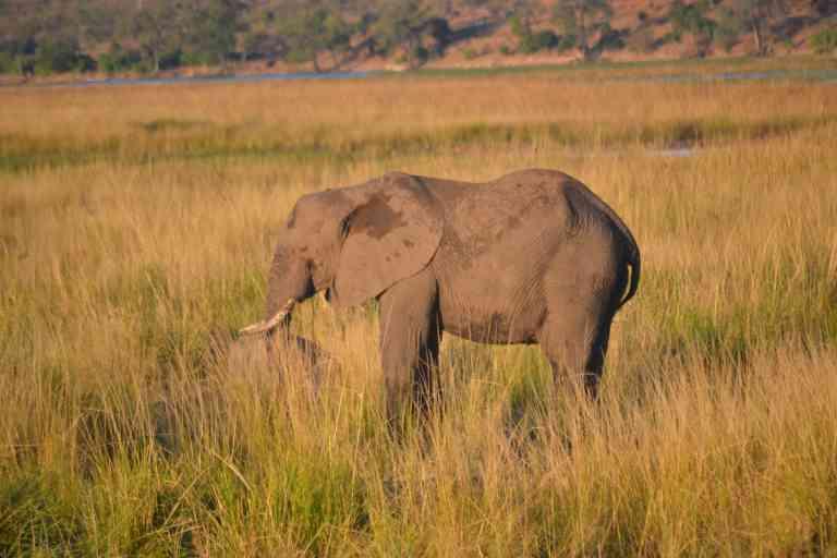 Chobe River Cruise, Botswana - JVH