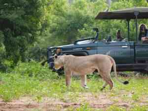 African Safari | What to spot