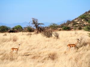Samburu Special Six