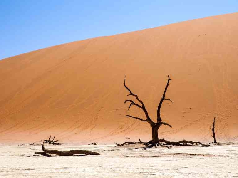 Deadvlei, Namibia by Emily Fraser