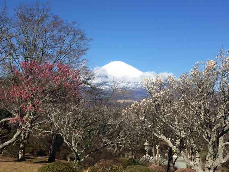 Cherry blossom with views of Mt Fuji, Japan by Sacha Bunnik