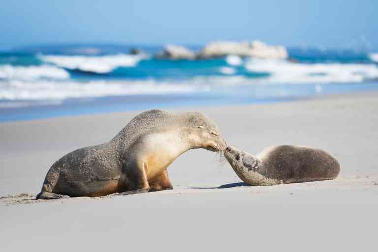 Seal Bay Conservation Park, Kangaroo Island by Ben Goode/South Australian Tourism Commission