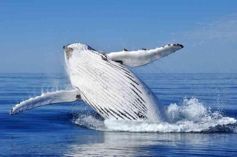 Whale watching near Busselton by David Ashley