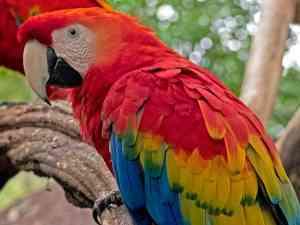 Parque das Aves | Bird Paradise