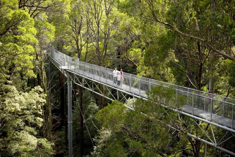 The Otway Fly Treetop Adventures by Visit Victoria