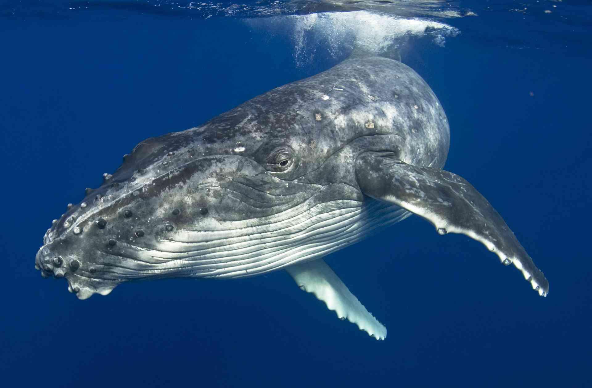 Witness the whales & wondrous wildlife