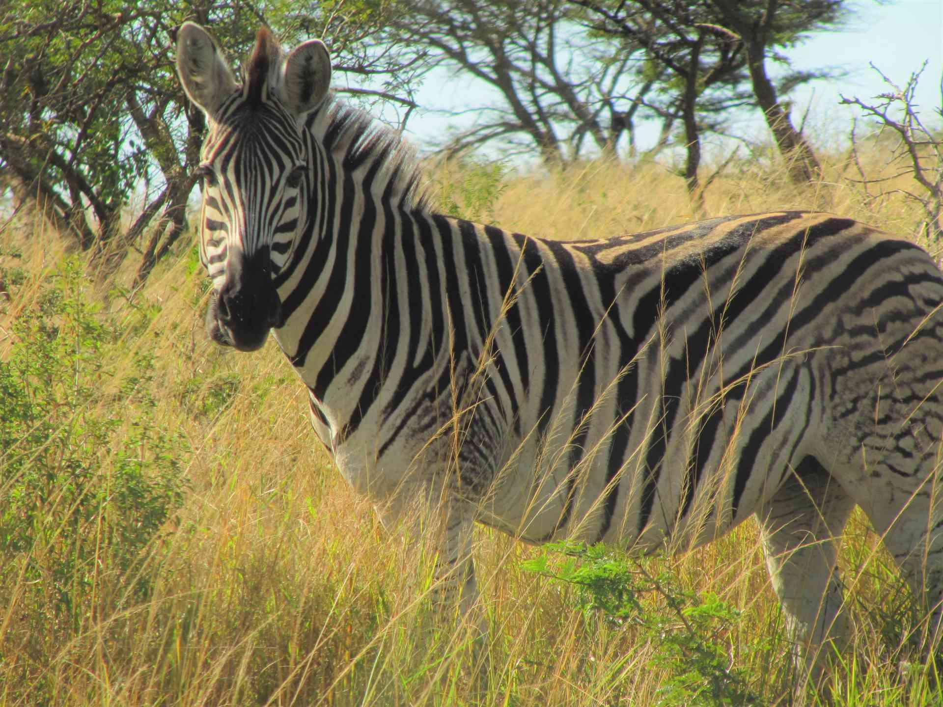 Safari & Wetlands Adventure