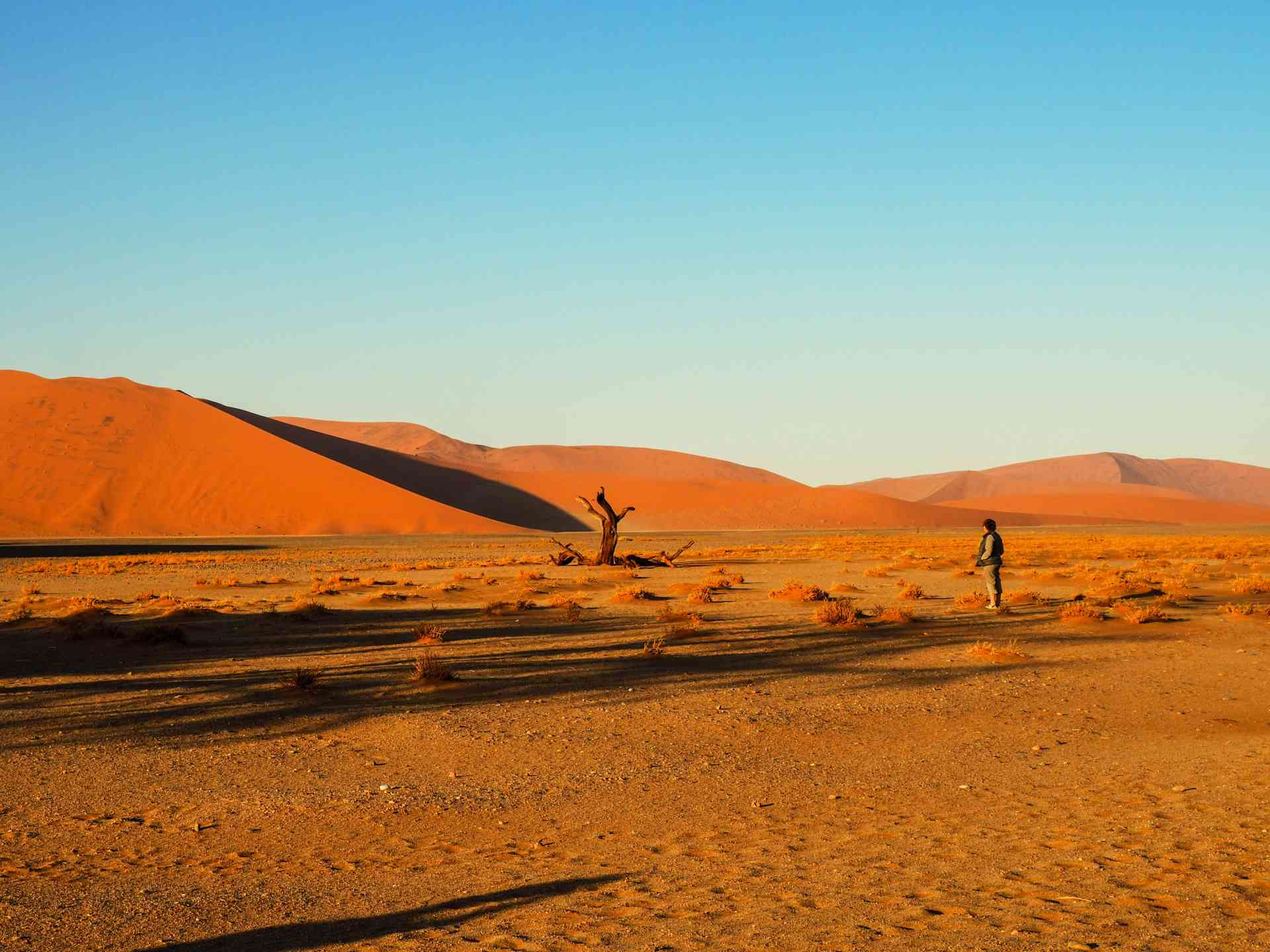 Discover the dunes & deserts of Namibia