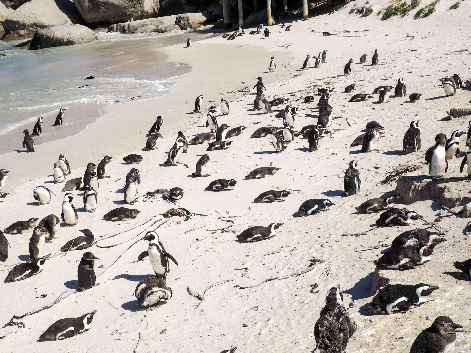 Cosmopolitan Cape Town