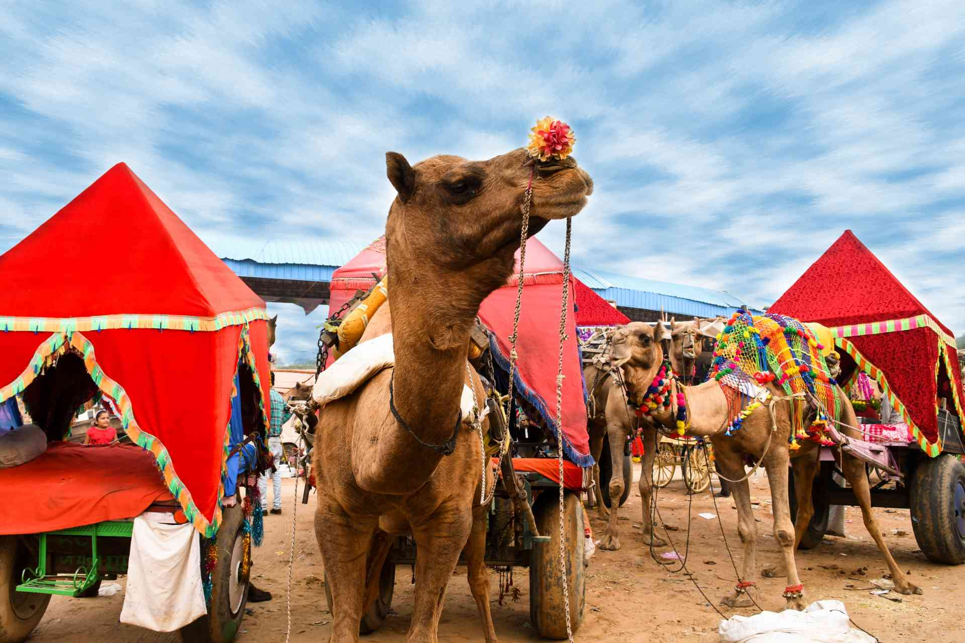 The colour & excitement of the Pushkar Festival