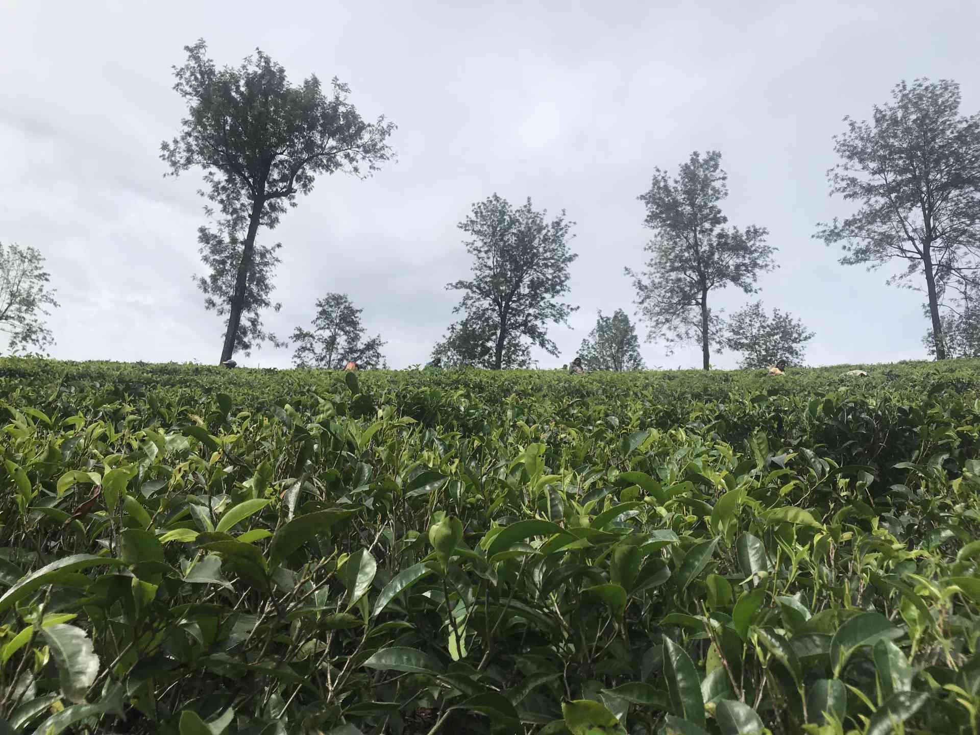 Aromatic Spice and Tea Factories