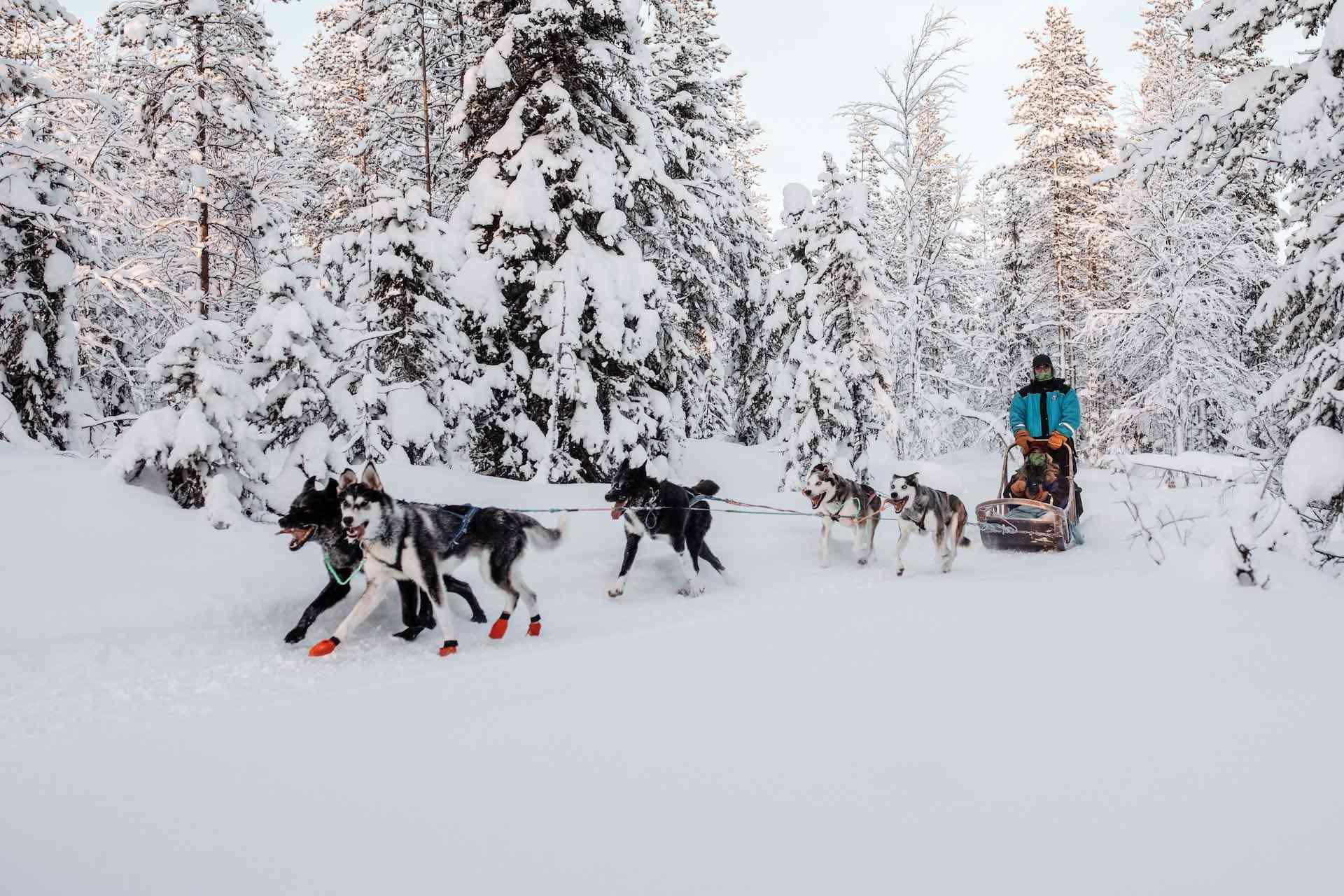 Animals of the Arctic