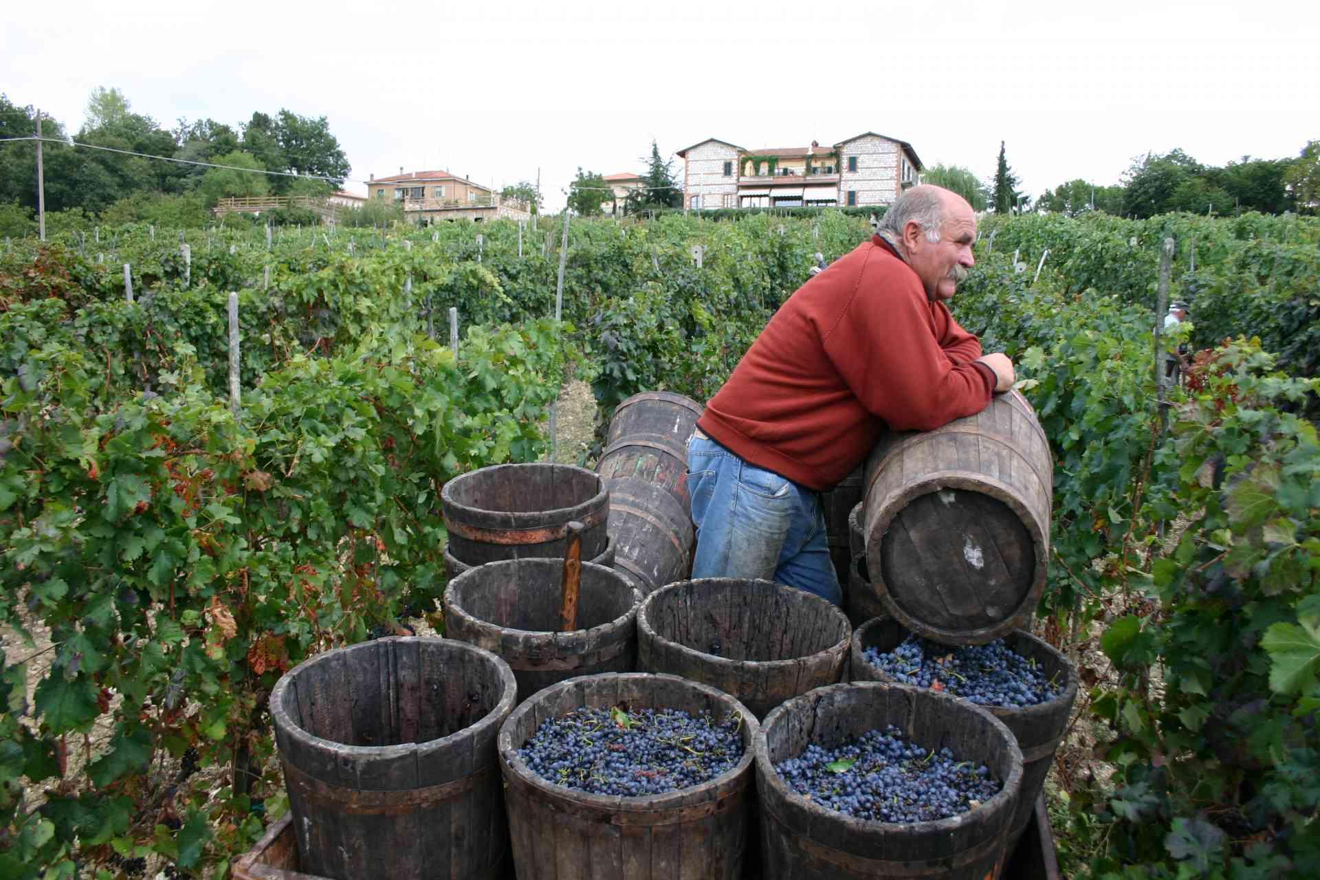 Tuscan Treats