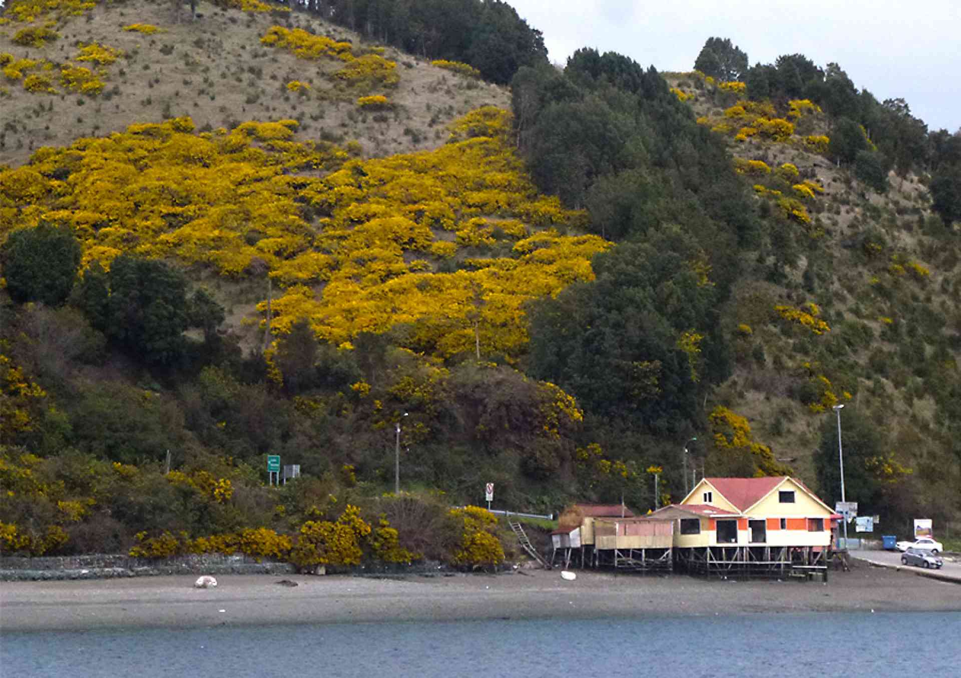 Explore Chiloé Island and the iconic Patagonian Lakes District