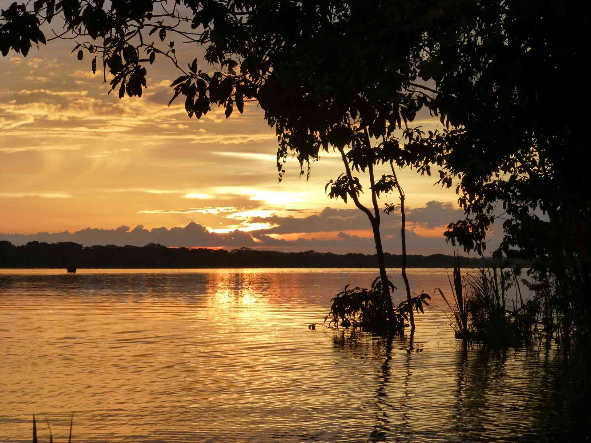 Amazonian Adventures and Incan Antiquities