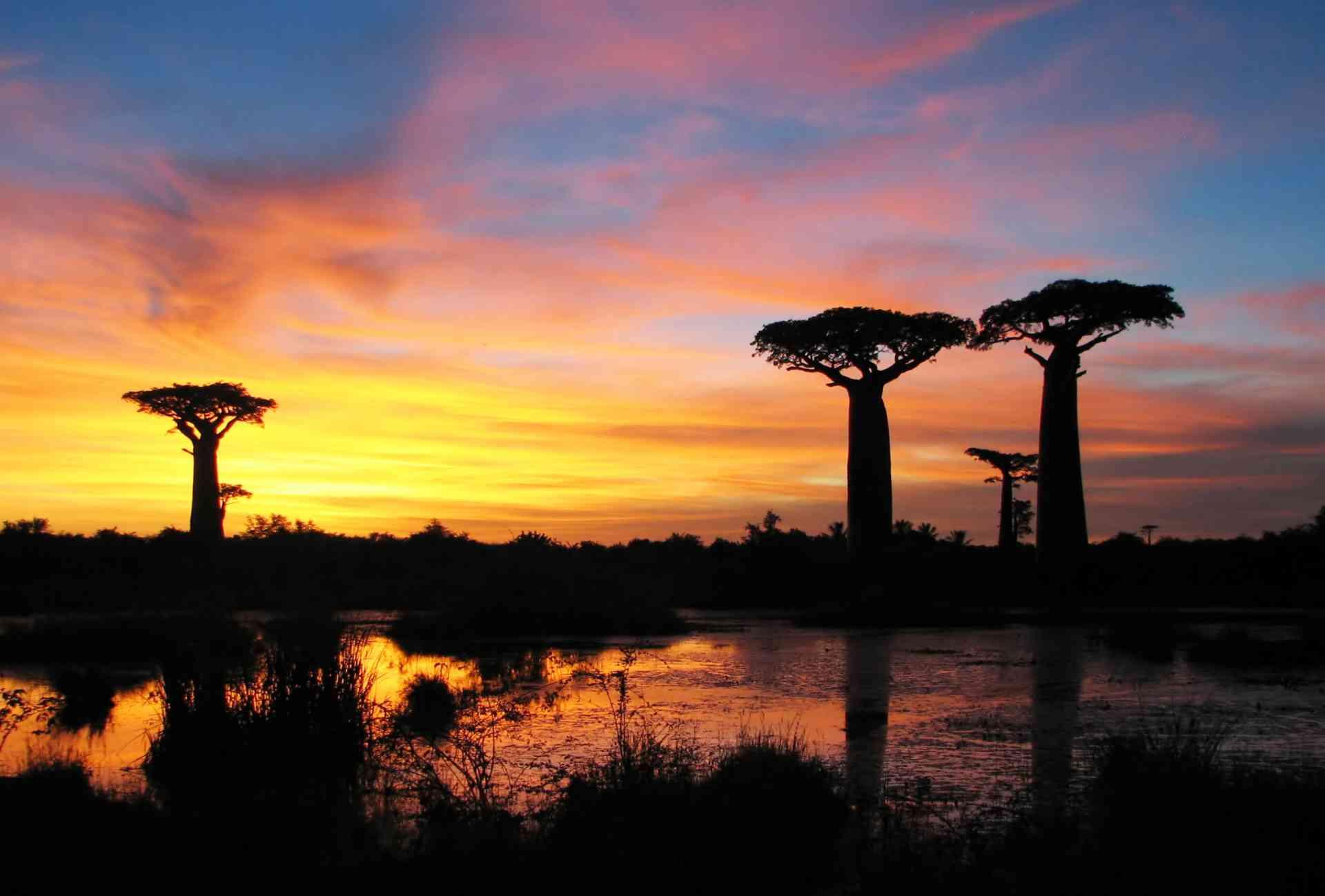 Beaches to Baobab Trees